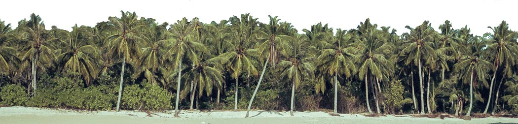 ding-repair-footer-palmtrees